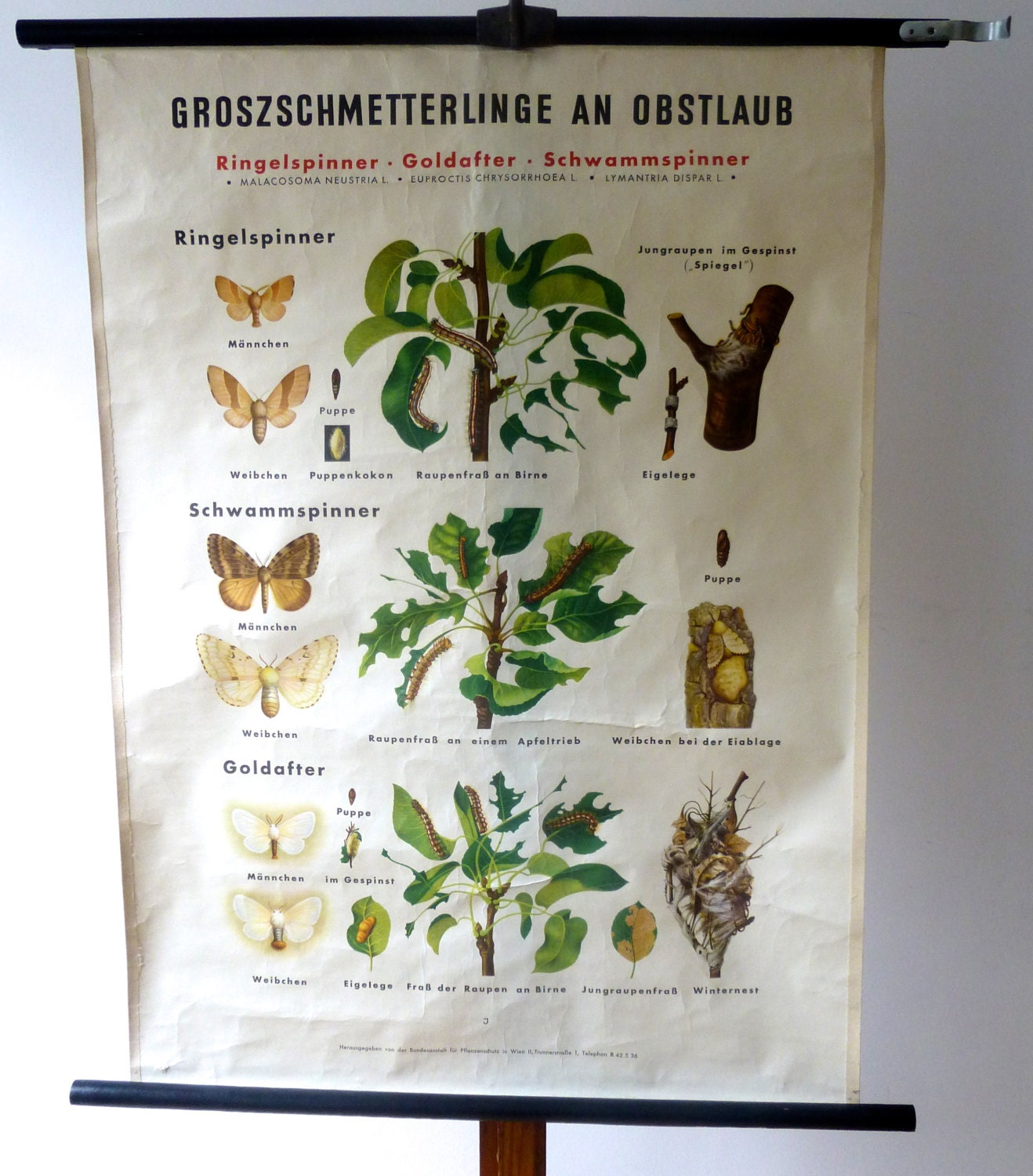 Vintage Botanical and Bug Pull Down Chart - Moths and Caterpillars - Butterfly Print - Vienna - Discoverprints