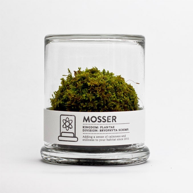 MOSSER scientific glass moss terrarium and spray bottle