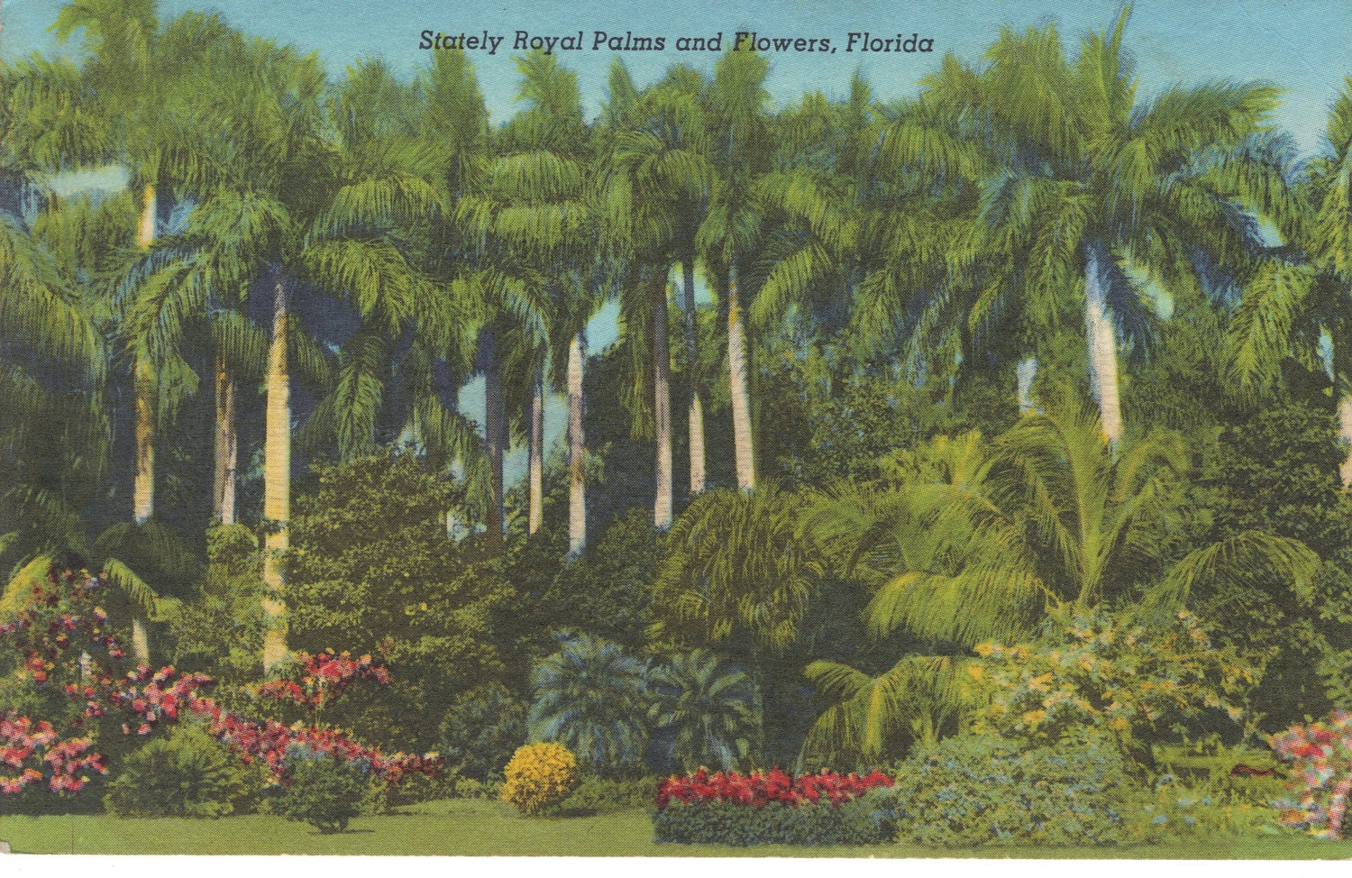 Sunken Gardens St Petersburg Florida Vintage By Heritagepostcards