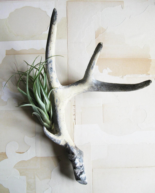 vintage cast iron antler - mydarlingdinosaur
