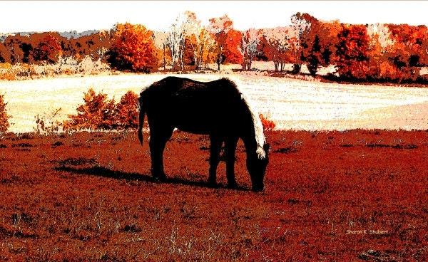 Southwestern Art Black Horse Grazing Abstract Giclee Print Autumn Fall Digital Wall Decor 8 x 10 - GrayWolfGallery