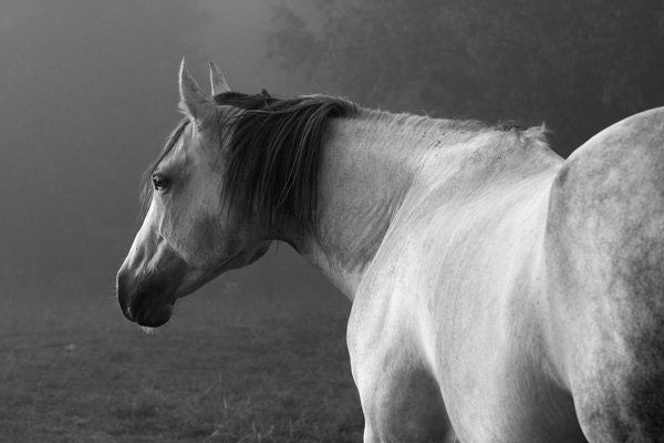 images of horses in black and white - photo #10