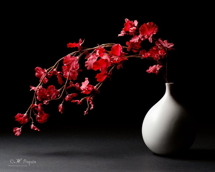 Still life photography fine art photograph by hpaquinphotography - Wall decor photography ...