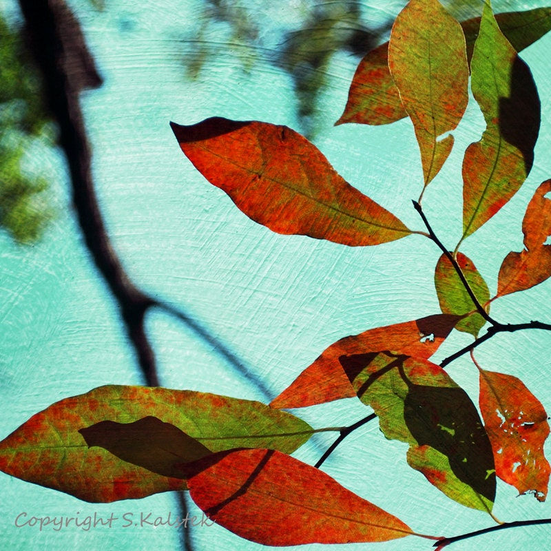 Nature Photography Tree Wall Art Leaves and by KalstekPhotography