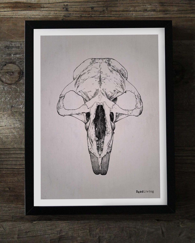"BEAVER Skull Poster 30 x 40 cm (approx. 12 x 16"")"
