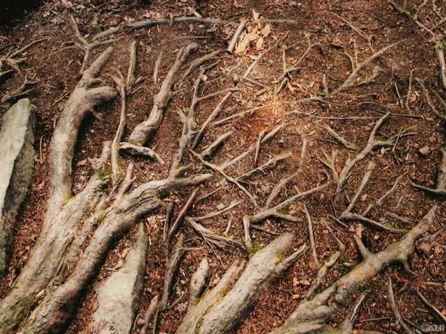 Roots Art Print - fringefalcon