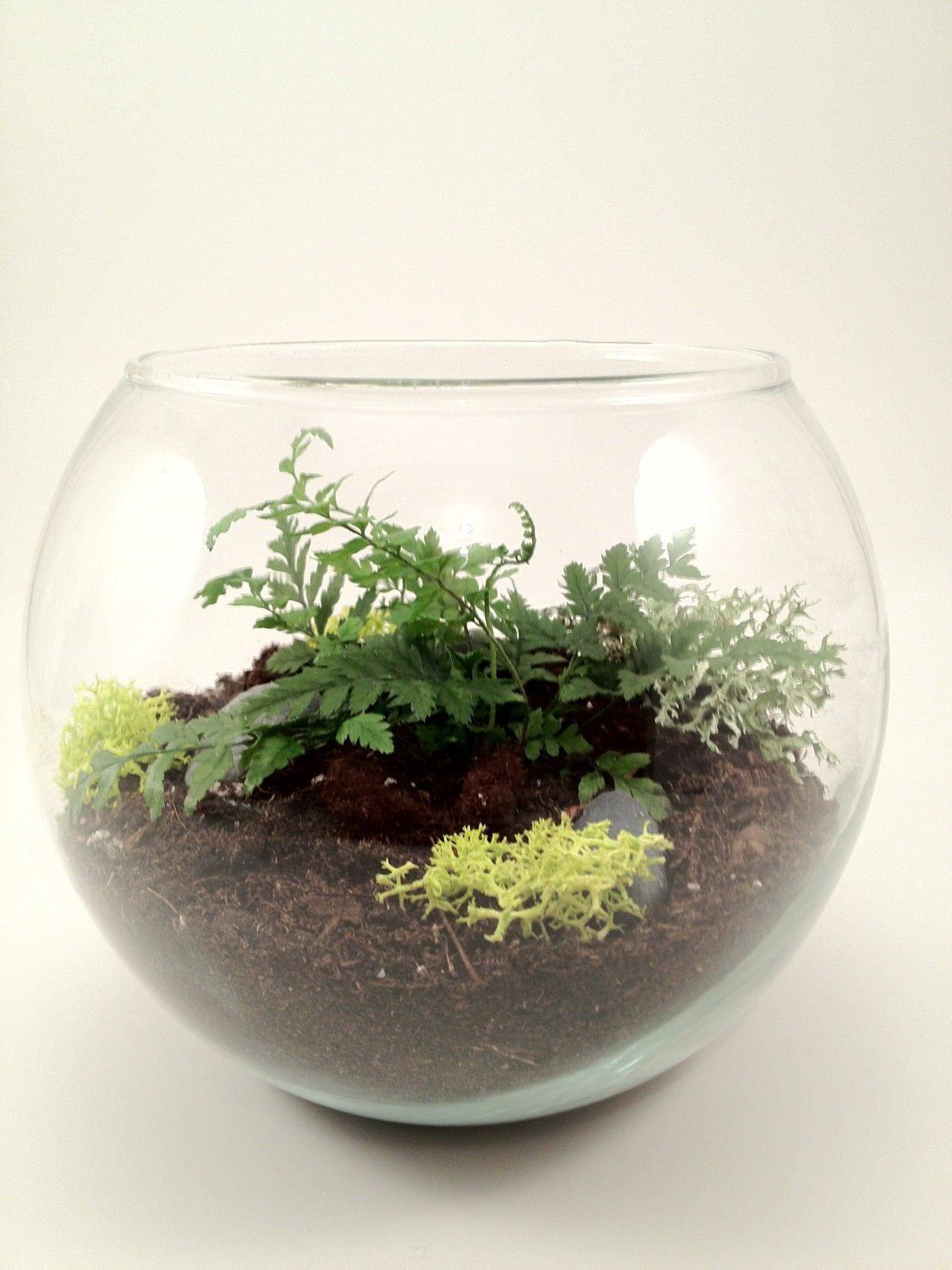 items similar to fern terrarium kit with moss glass. Black Bedroom Furniture Sets. Home Design Ideas
