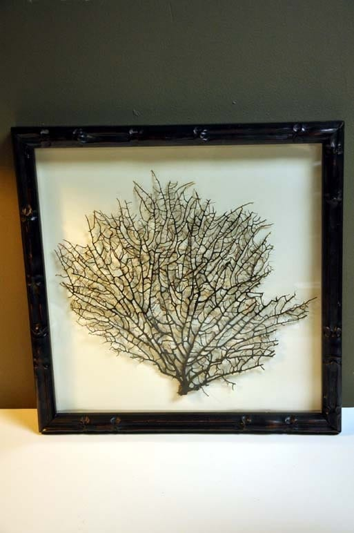 Framed Black Coral - kristinica