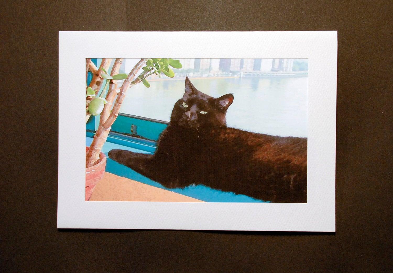 Футболка Черная кошка купить в Москве: цены 77