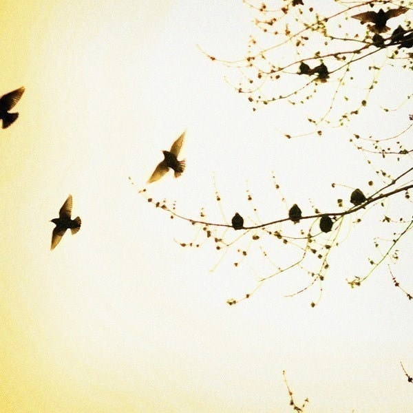 Bird Photograph - Nature Photography - Trees - Spring - Flock- Original Signed Fine Art Photograph