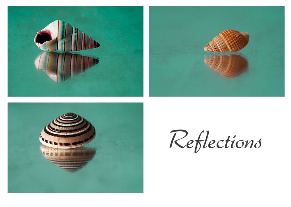 Three Sea Shell Photographs, Nautical  Wall Decor, Brown, Aqua Still Life - JudyStalus