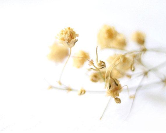 Wildflower Photography 8x10 Print Macro Flower White Beige Yellow Pastel Garden Wall Decor - EternalMoment
