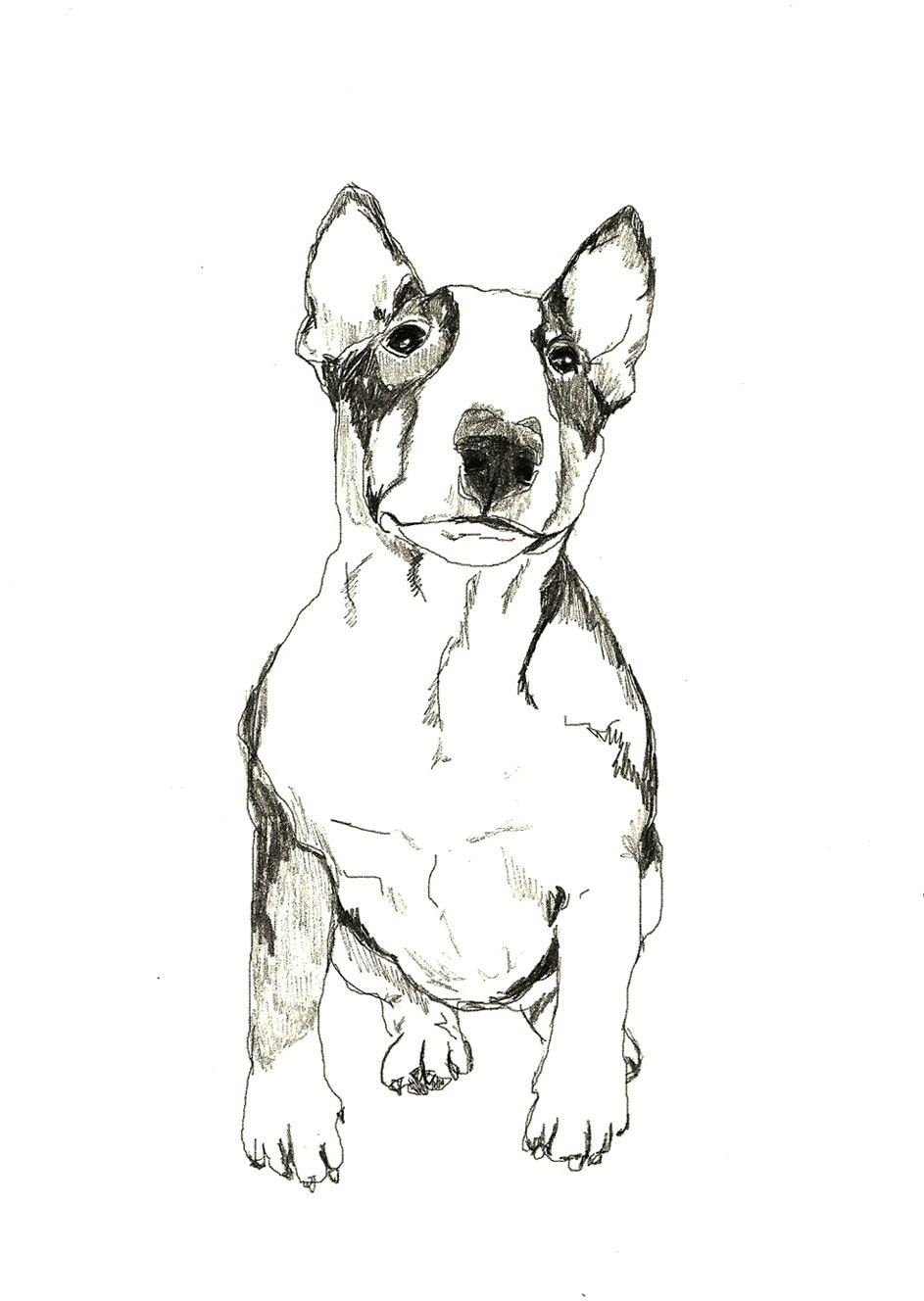 Custom Pet Portrait - corelladesign