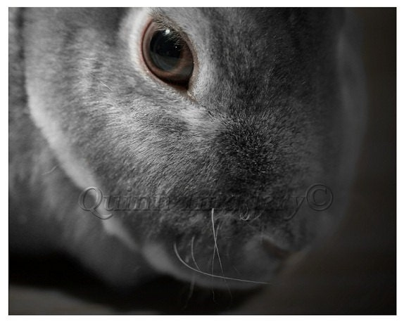 Rabbit Photograph Bunny Black White Grey Brown Fine Art Photography