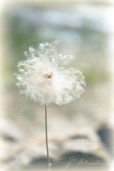 Dandelion Dreams, 8x12, Fine Art Photography Print, Fluffy Pastel Dreamy Girl Mint Green - j2studiosphotography