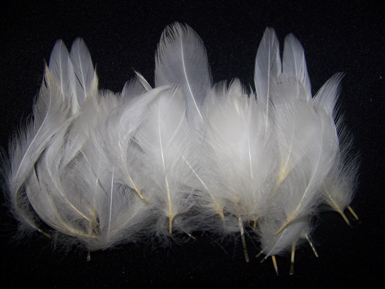 White Pekin Duck Feathers By Sevenarrowsshoppe On Etsy