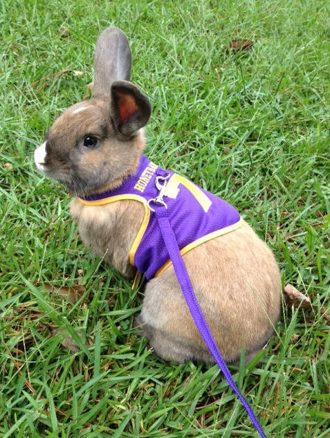 Custom Made Football Jersey Harness For Your Rabbit By Turvytopsy