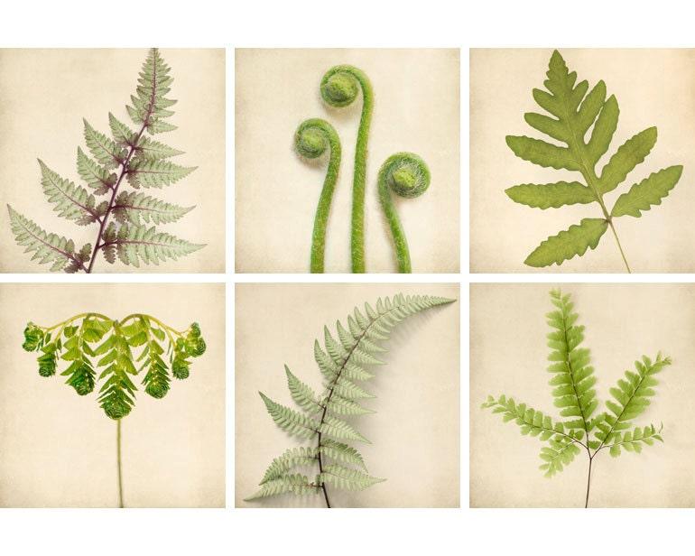 Fern Prints, Botanical Prints, Green Art, Nature Photography Set, Fern Art, Nature Artwork, Fern Wall Art, Photo Set, Set of 6 Prints - RockyTopPrintShop