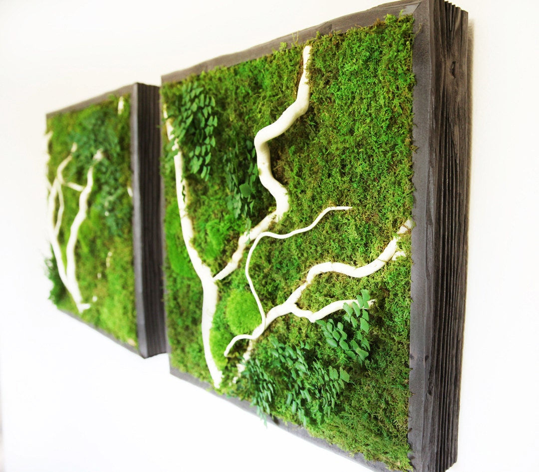 Living moss wall  Etsy