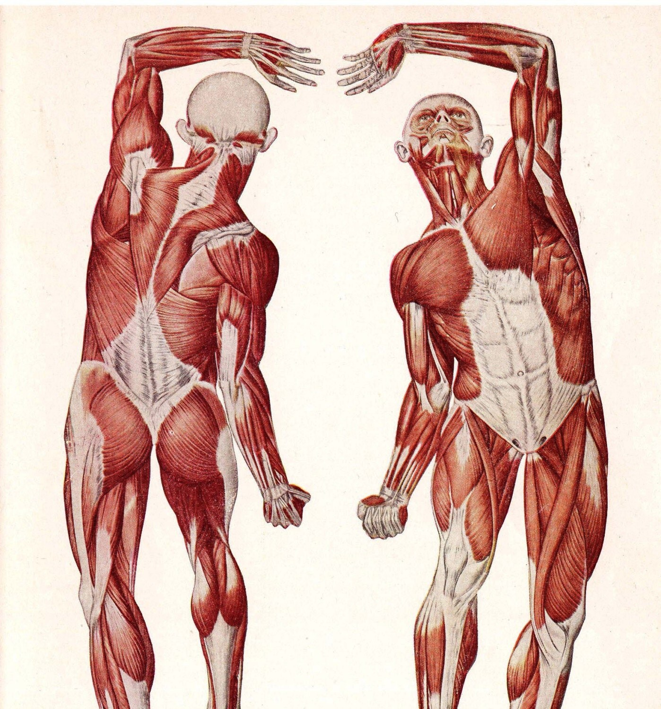 Male Human Body Muscles Anatomy Sexy Man Sexy Brain