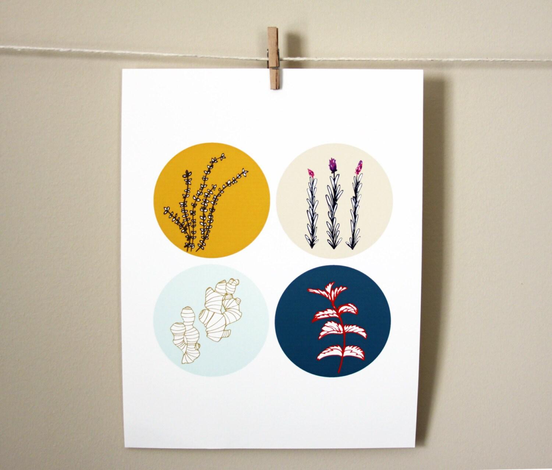 Ginger and Herbs, 8x10 art print - nativebear