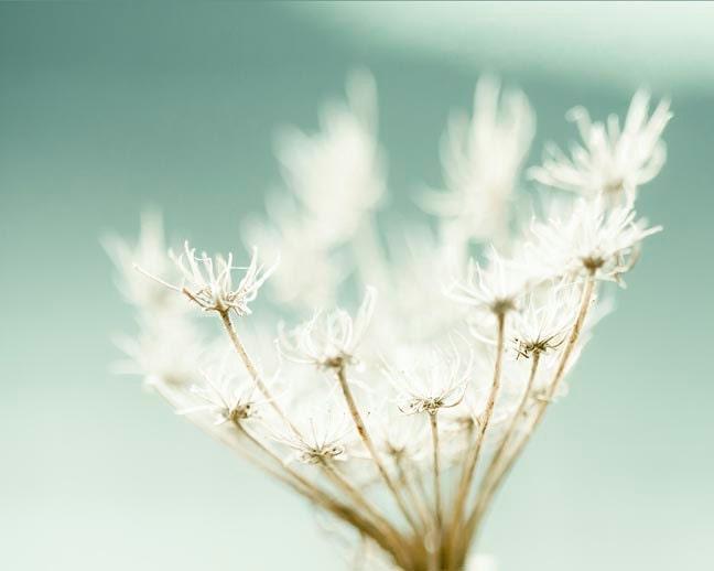 Flower Photograph, women, sea foam green, nature, wall decor, art, peppermint green - Raceytay