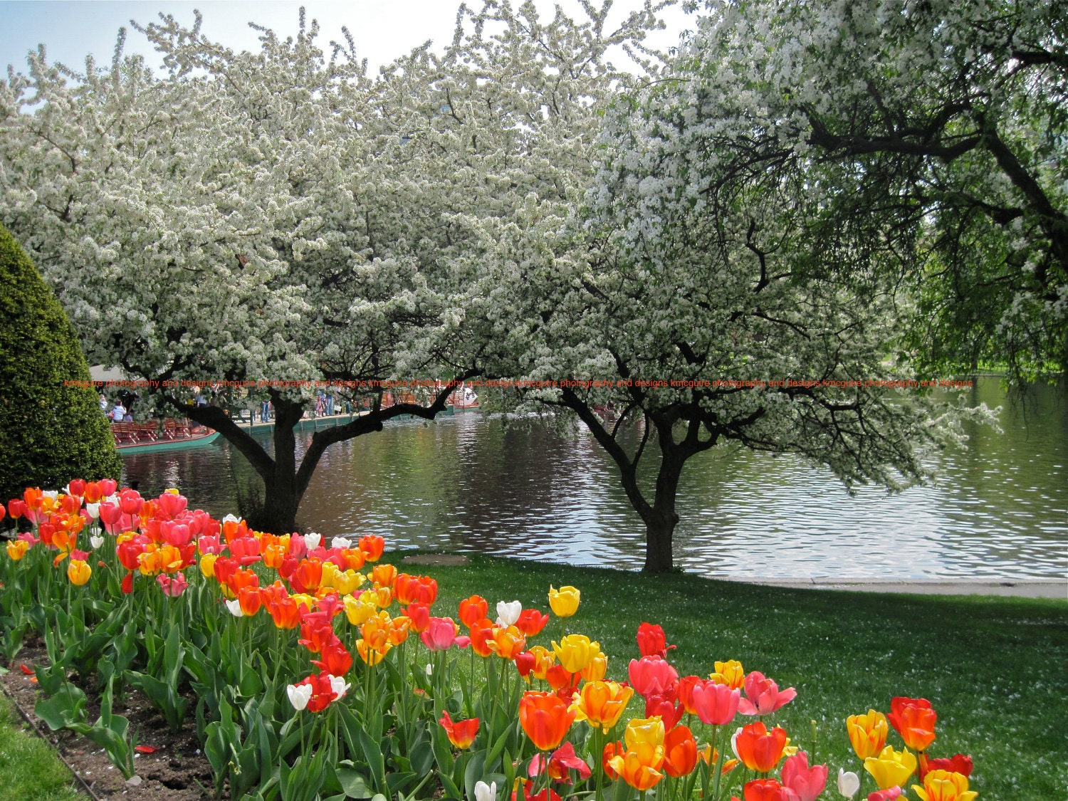 Public Garden Boston Massachusetts Spring By
