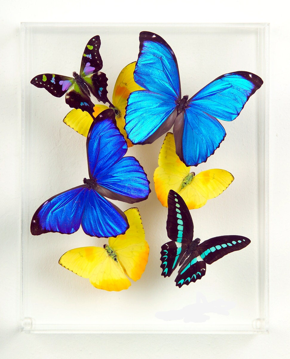 Real colorful butterfly