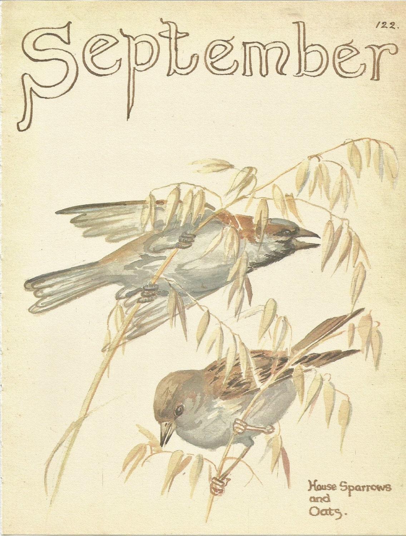 Vintage Sparrows 57