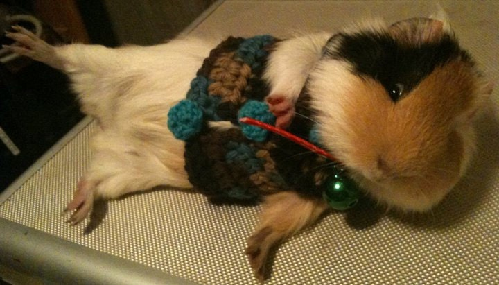 Guinea Pig Sweaters Custom Order for Marie by Barbiloulou on Etsy