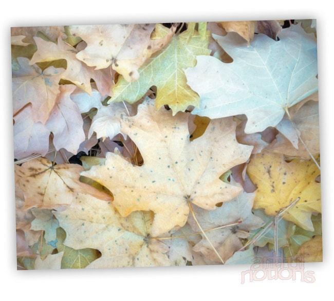 Pastel Art, Fall Leaves, Autumn Art, Photograph, Forest Art, Woodlands Photo, Maple Leaf, Wall Decor, Wall Art, Fine Art Print, 11x14 - artfulnotions