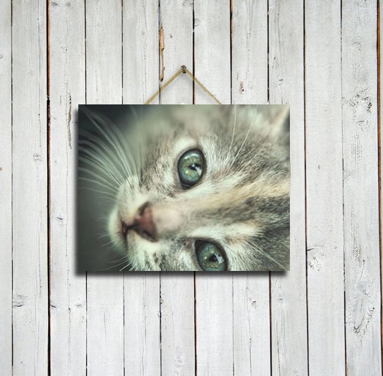Bright Eyes - 11x14 print - Animal wall decor - Sage and grey wall decor - Sage wall art - Cat wall decor - Cat wall art. - EmeraldTownRaven