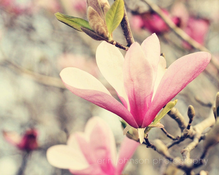 spring decor flower photography pink tulip tr ...