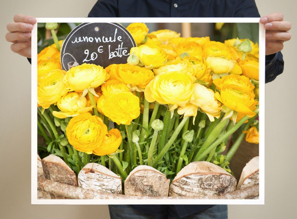 Paris Flowers, Yellow Ranunculus -- Paris Photography, 16x20 Large Art Prints - Flower Art, Green