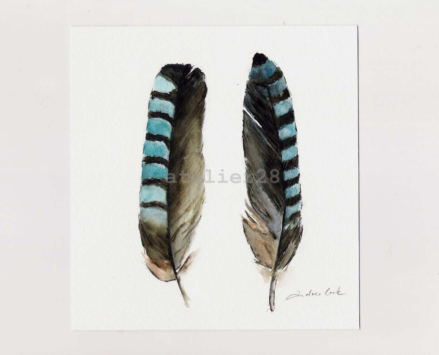 original ink and watercolor painting of two jay feathers