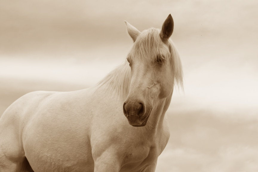 Ivory Horse Art White Horse Photo White Horse 8x12 Archival Photograph Equine Gift
