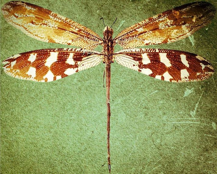 "nature decor woodland dragonfly green grunge insect print art print original TITLE: ""Dragonfly"" 8 x 10 by Muriel McDonald"