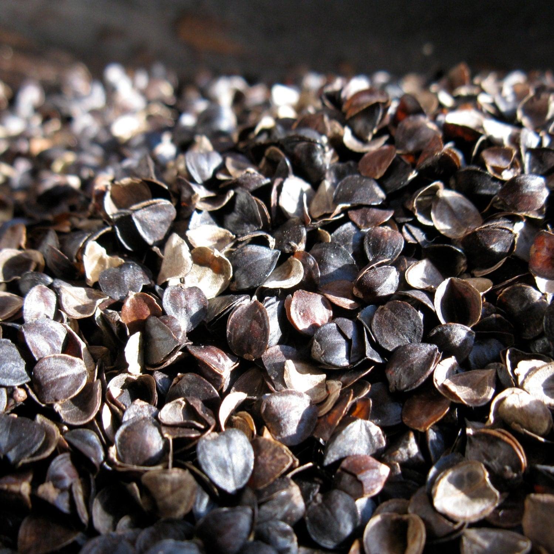Buckwheat or Millet hulls Sample for bulk by OpenYourEyesBedding570 x 570 jpeg 68kB