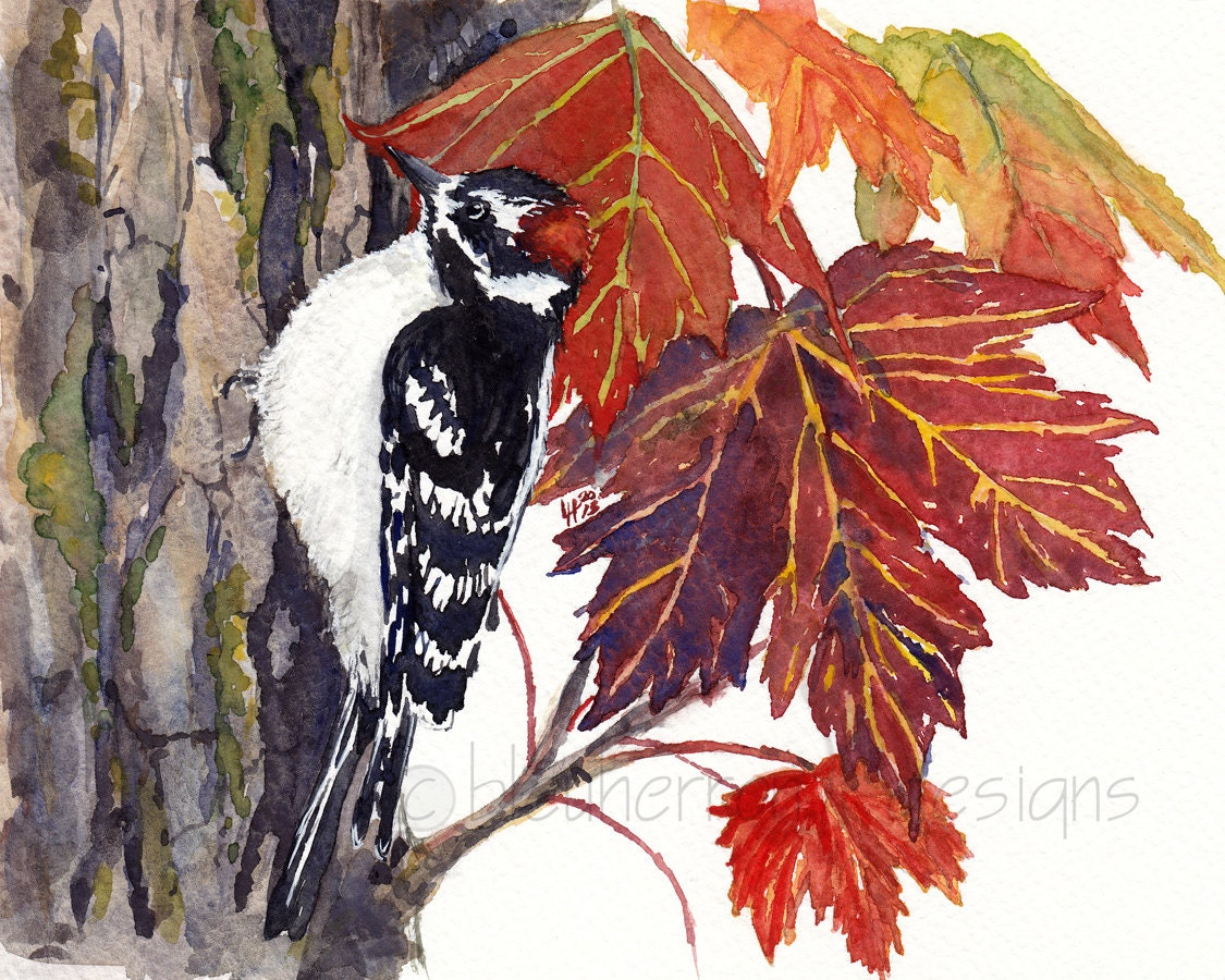 watercolor bird- Woodpecker in Autumn Maple- 8x10 print - bleuherron