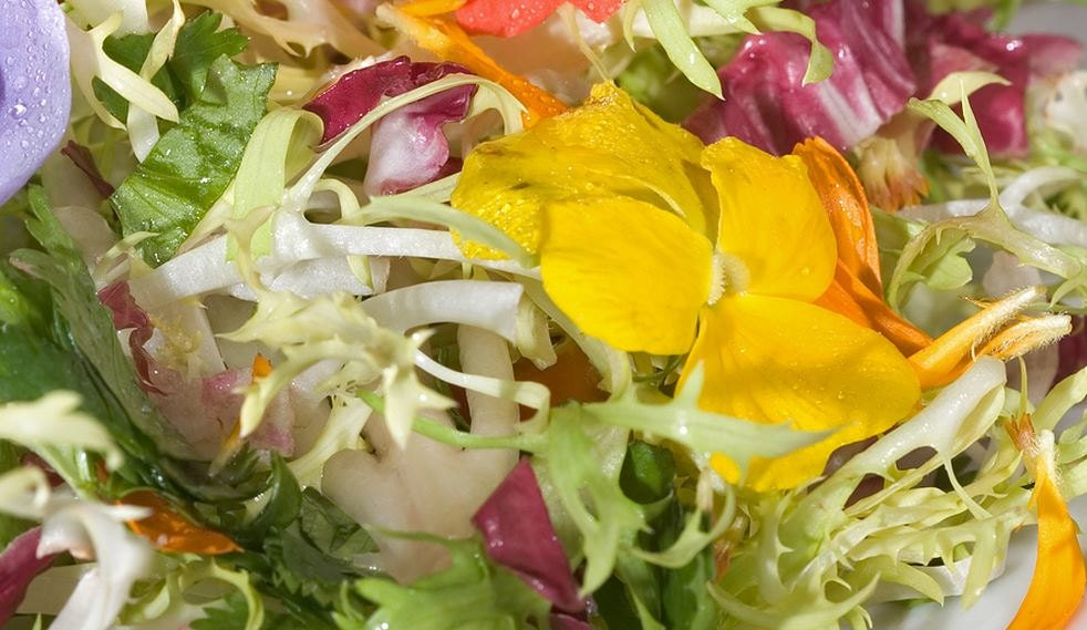 Lettuce, Organic Edible Flower Salad Seeds | Exclusive Blend of Heirloom Lettuce and Flowers - thegardenstudio