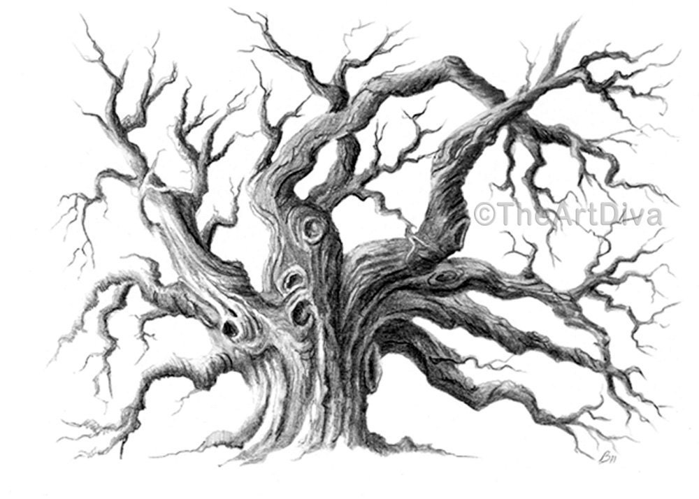 Pencil drawing oak tree black and white archival by