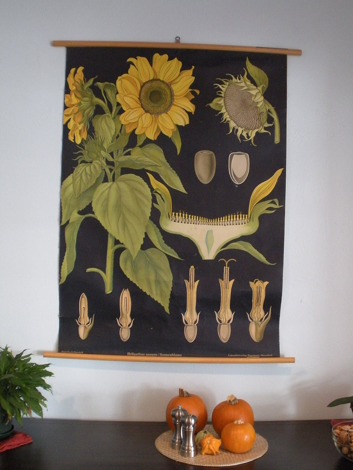 Vintage Sunflower Wall Decor : Sunflower vintage botanical wall hanging roll by silentstories