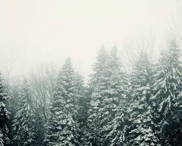 mist christmas tree to keep fresh