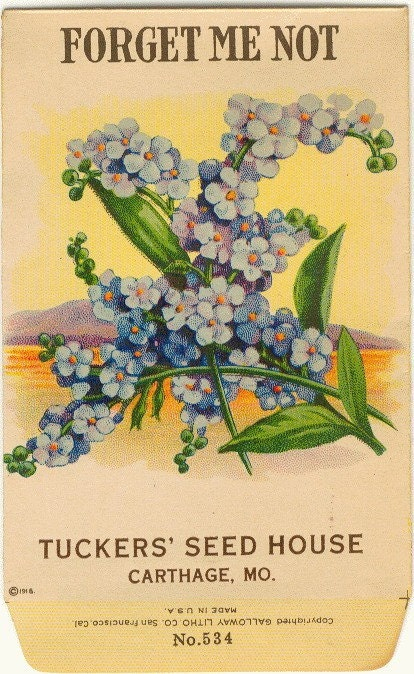 Vintage Flower Seed Packet Tuckers Seed House Lithograph FORGET ME NOT ...