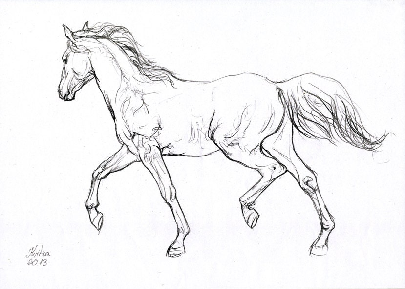 Running horse drawing easy - photo#13