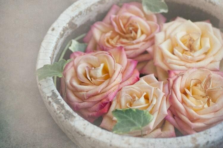 Paris Photo - Les Belles роз - Шар Розовый и желтых роз в Париже Цветочный рынок, Франция, Французская изобразительного искусства Путешествия Фотография