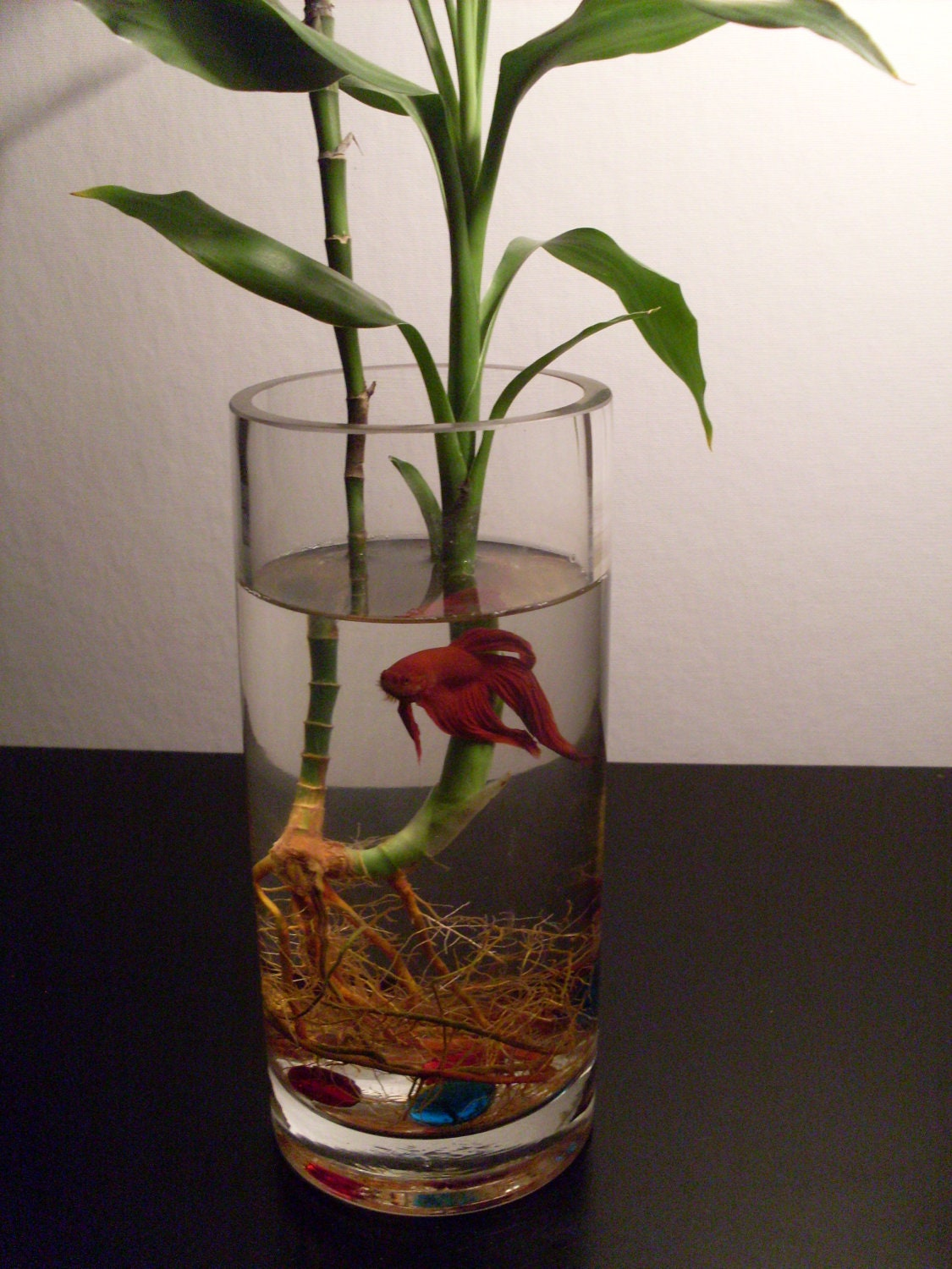 1000 images about beta fish bowls on pinterest for Betta fish bowl