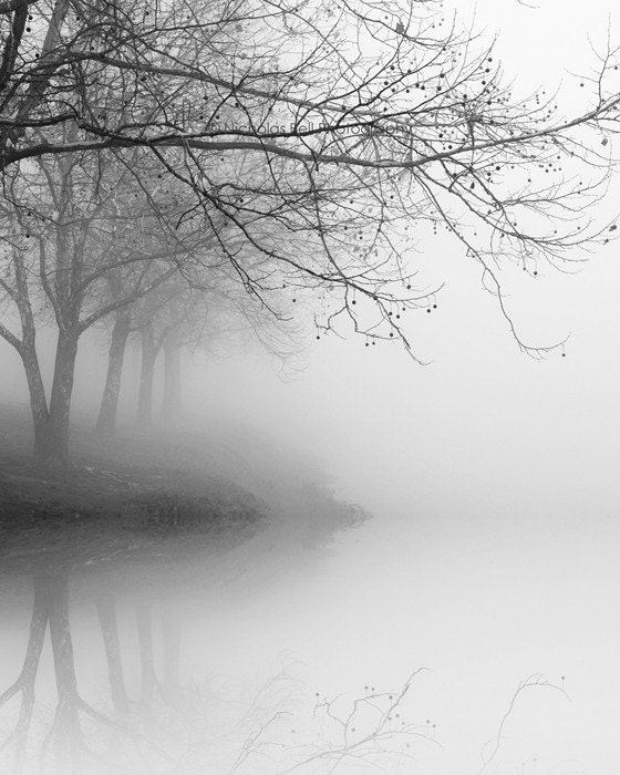 black and white photography, trees, fog, landscape, nature, winter 8 x 10 print - NicholasBellPhoto