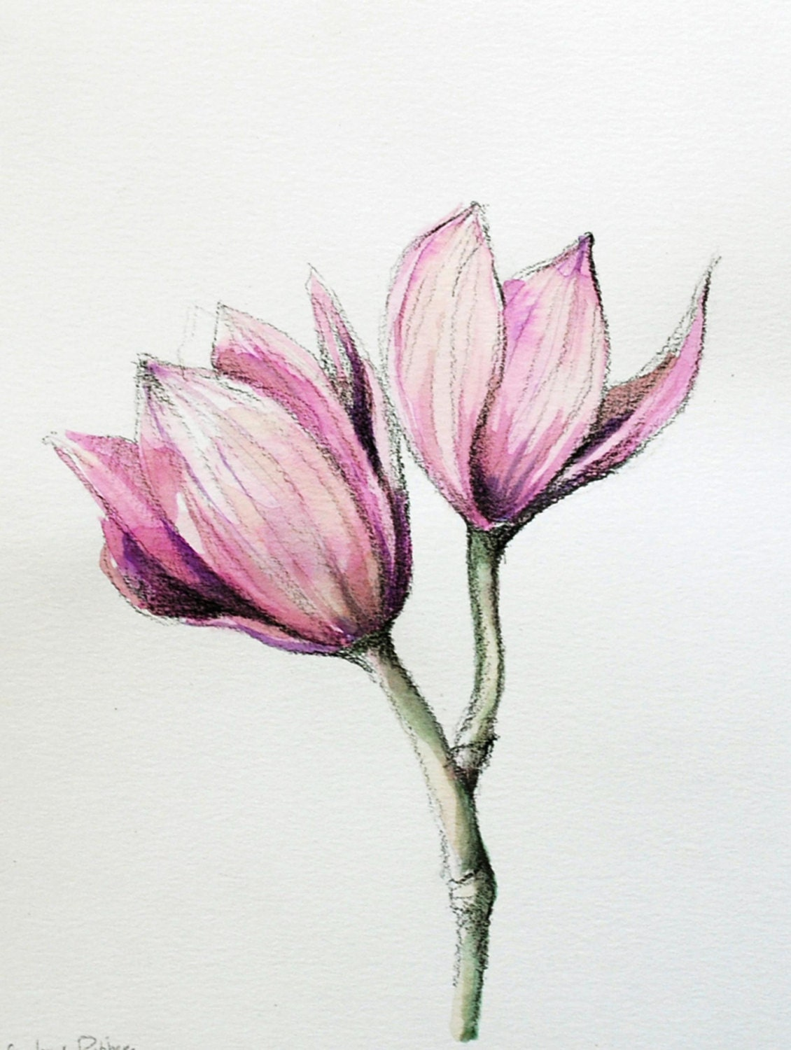 Cool Colorful Flower Drawings Wwwgalleryhipcom The