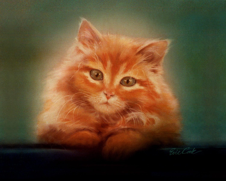 Displaying 20> Images For - Fluffy Orange Kitten...